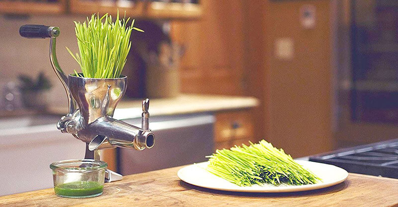 Buying guide best wheatgrass juicer